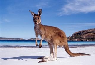 tourism-australia-wants-you