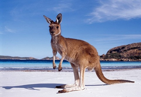 tourism-australia-wants-you