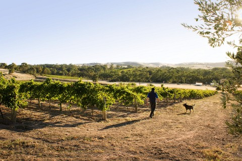 two-hands-wines-cellar-door-barossa-valley