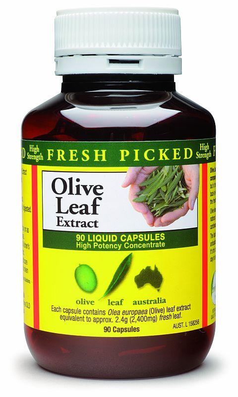 olea-olive-leaf