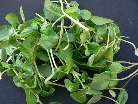 Trivia Tuesday: Where is the annual Watercress Festival?