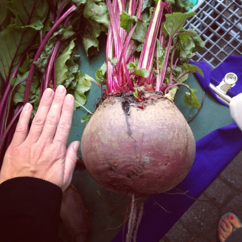 Giant beetroot
