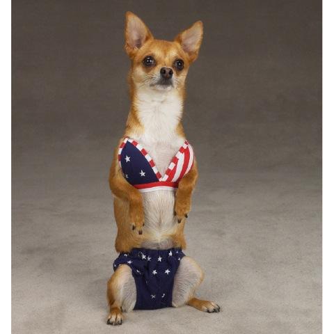 Cute-Dogs-in-Bikinis-6