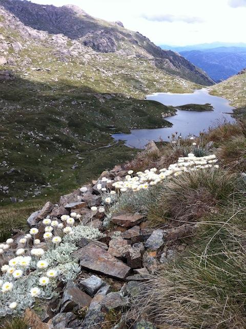 Kosciuszko hike