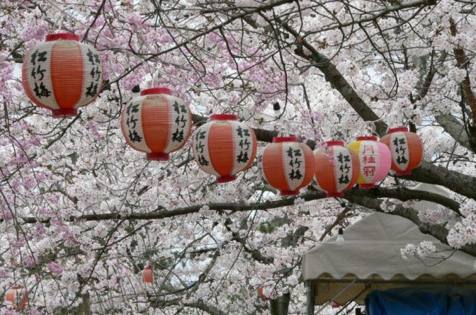 Sakura Matsuri in Gion