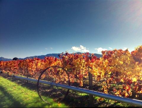 Making wine in New Zealand