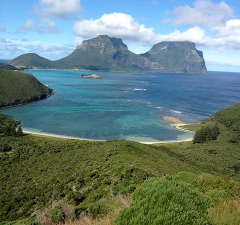 Lord Howe love-in