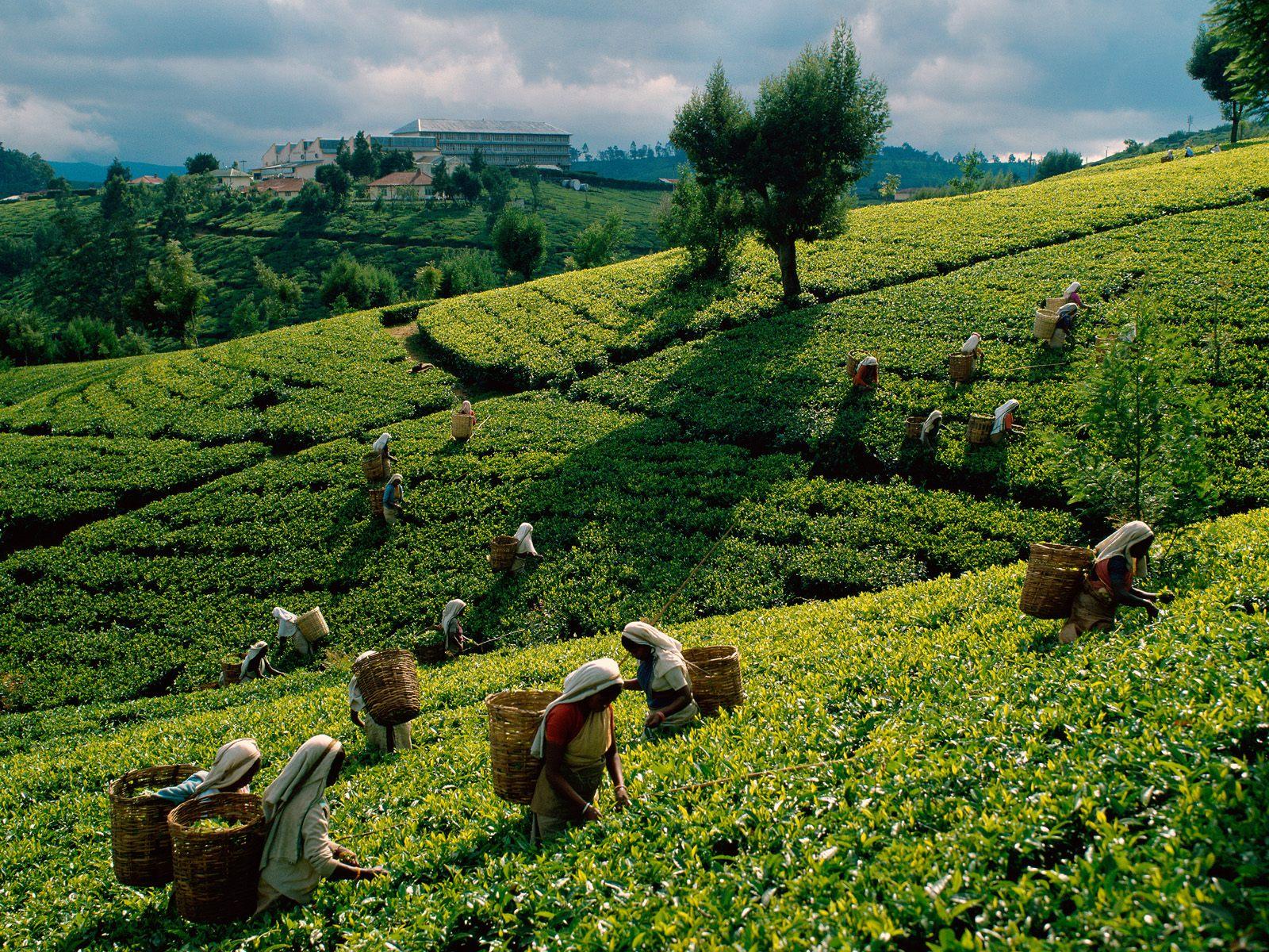 Snapshots of Sri Lanka