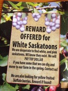 reward for Saskatoons