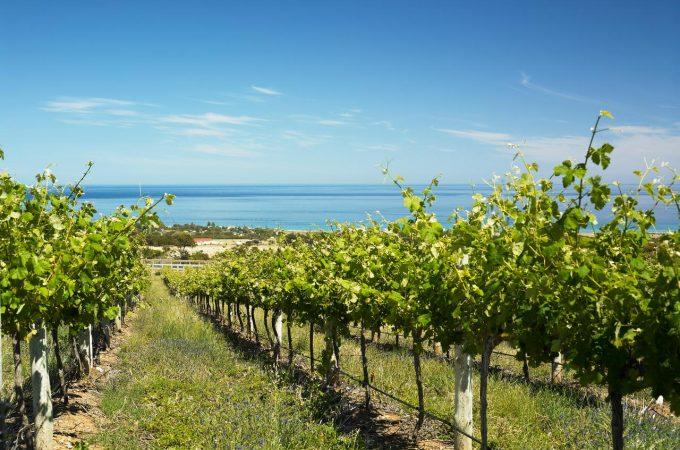 Wine land