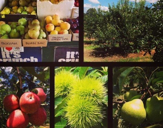 Pick your own in Bilpin NSW