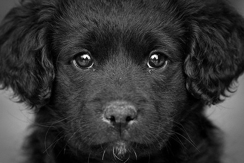 The black dog isn't so scary. It's part of many people's lives.