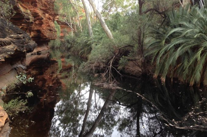 Kings Canyon day tour: A review