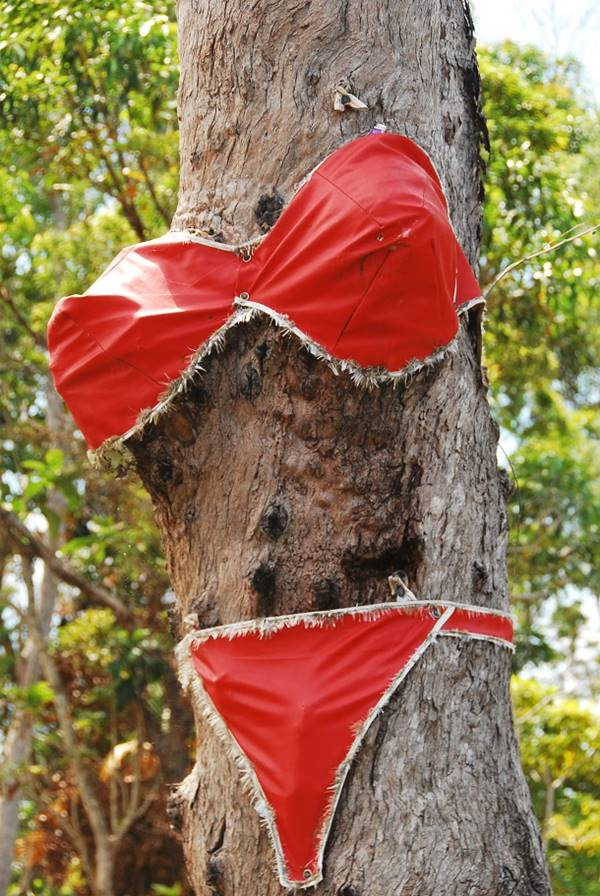 The bikini tree. Image courtesy of the Travel Tart
