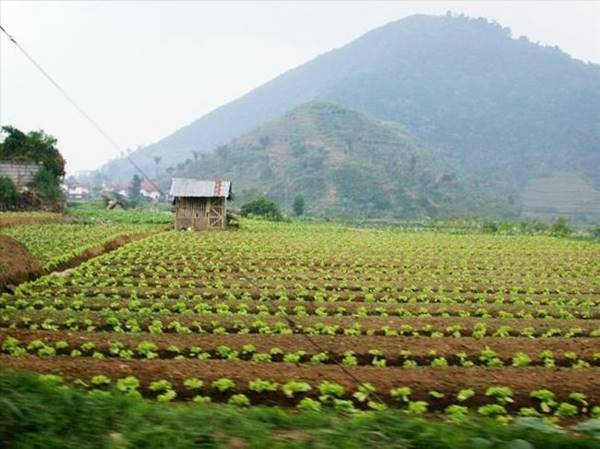 Hot spot: Bogor, Indonesia