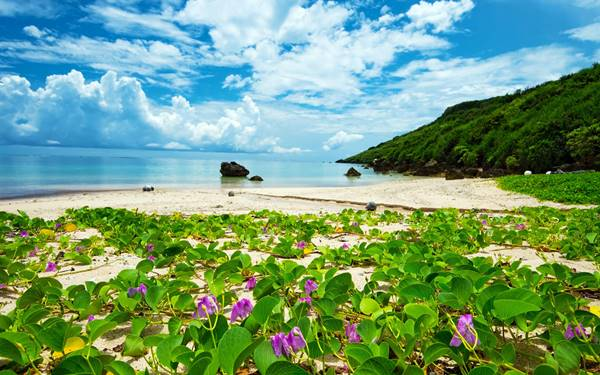 Life, By Okinawa