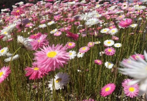 Mount Annan Botanic Garden